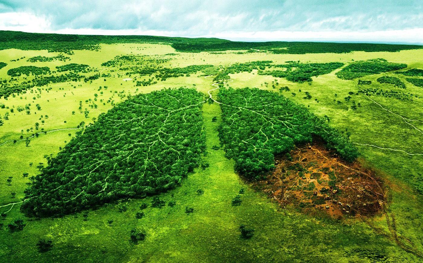 کشتارگاه صنعتی حفظ محیط زیست/ مقالت محیط زیستی/ شرکت مهندسی آب نیک/ طراحی ...